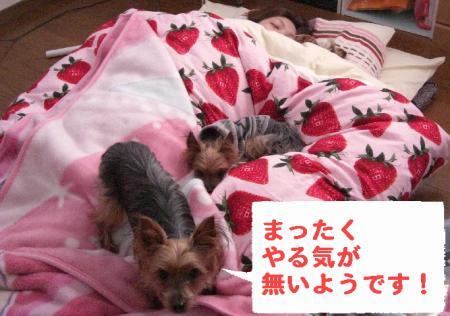 コピー ~ 2008.11.27~ 014