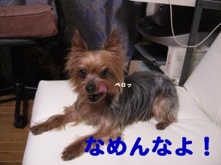 コピー ~ 2008.11.27~ 022