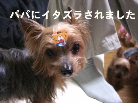 コピー ~ 2008.11.27~ 036