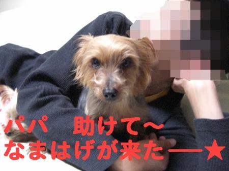 コピー ~ 2008.11.27~ 054
