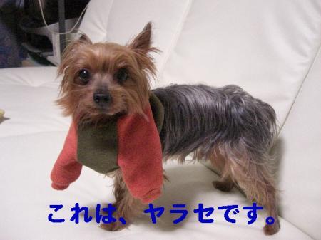 コピー ~ 2008.12.4~ 088