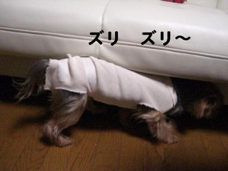コピー ~ 2008.12.4~ 072