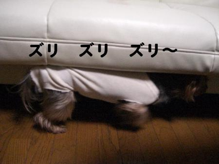 コピー ~ 2008.12.4~ 075