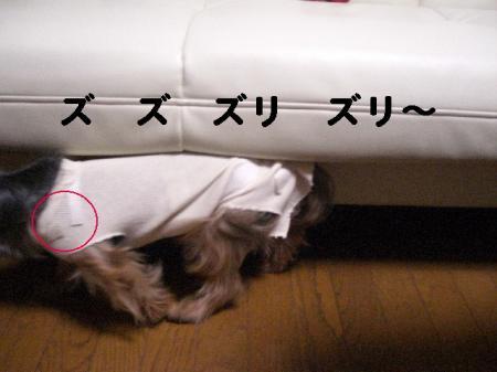 コピー ~ 2008.12.4~ 076