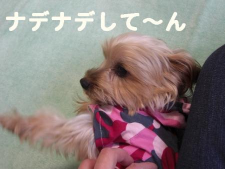 コピー ~ 2008.12.12~ 026