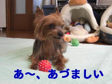 コピー ~ 2008.12.12~ 035
