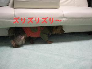 コピー ~ 2008.12.20~ 012
