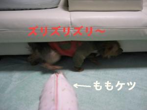 コピー ~ 2008.12.20~ 015