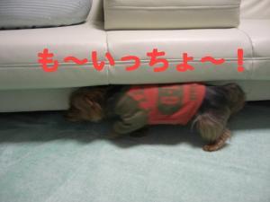 コピー ~ 2008.12.20~ 016