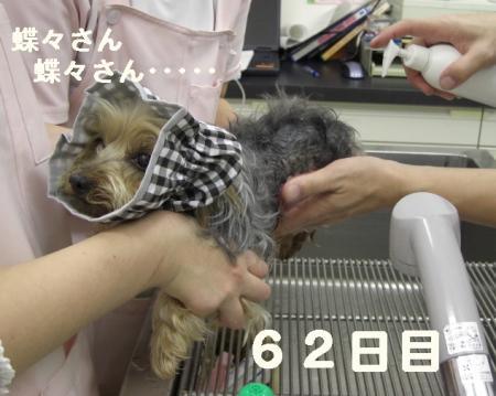 コピー ~ 2008.12.20~ 035