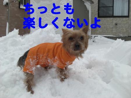 コピー ~ 2008.12.20~ 085