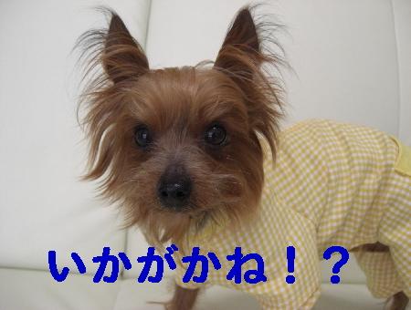 コピー ~ 2008.12.20~ 072