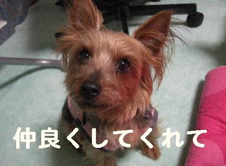 コピー ~ 2008.12.20~ 058