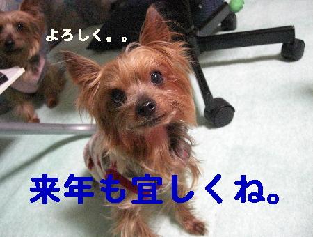 コピー ~ 2008.12.20~ 062