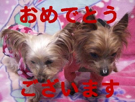コピー ~ 2008.12.30~ 052