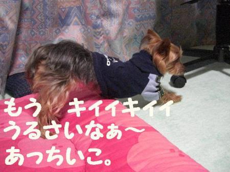 コピー ~ 2009.1.12to 042