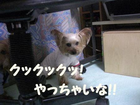 コピー ~ 2009.1.12to 046