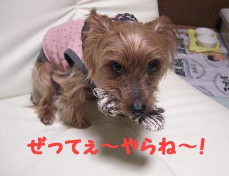 コピー ~ 2008.12.20~ 050
