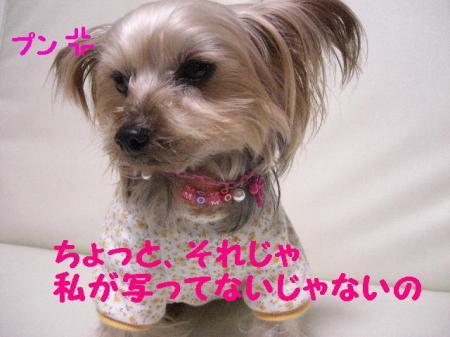 コピー ~ 2009.1.12to 050