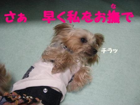 コピー ~ 2009.2.14to 051