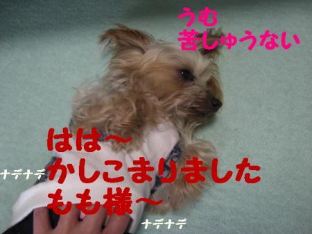 コピー ~ 2009.2.14to 056