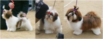 ベビー&パピー・クラスのBOB犬