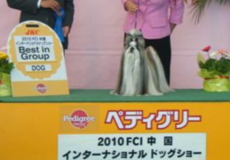 ♂の代表犬はG1入賞♪