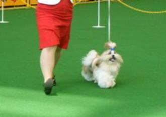 パピー♂のBOB犬。