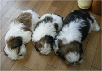 並んでお昼寝。