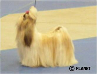 ♀のBOB犬
