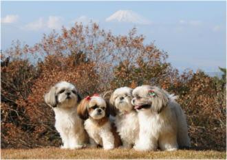 素敵な家族写真(*^_^*)