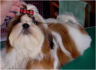 ビリーヴの兄弟犬キッド。