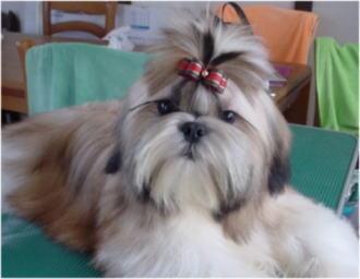 フェイスの兄弟犬②