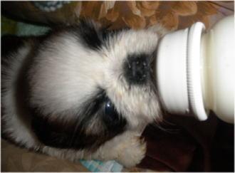 「ミルク美味しいよ~!」