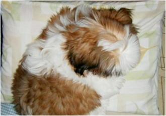 私の枕が・・・(~_~;)