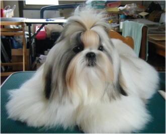 この毛、他のワンコにあげたい・・・笑