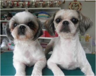 ボニータの両親犬。