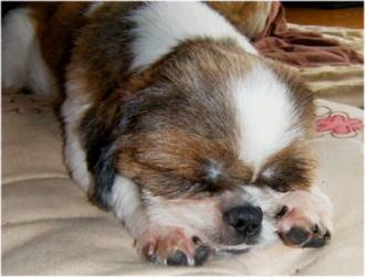 普通の寝顔はこんな感じです。