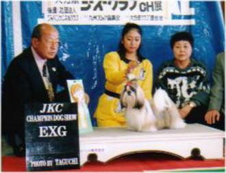 JKC・CHウィーピー