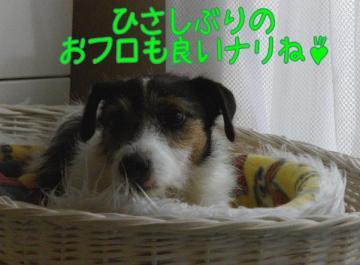 20090808004.jpg