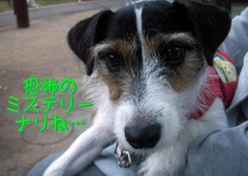 20091011007.jpg