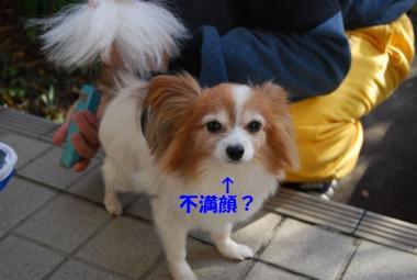 DSC_9525 ブログ
