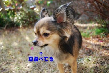 DSC_9535 ブログ