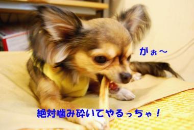 DSC_9355 ブログ