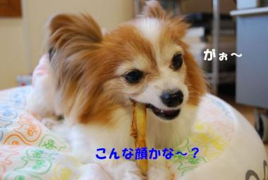 DSC_9323 ブログ