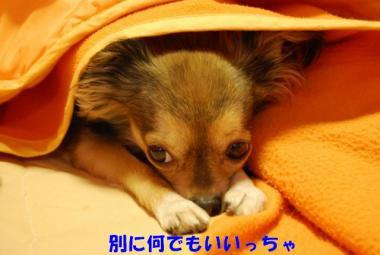 DSC_9258 ブログ