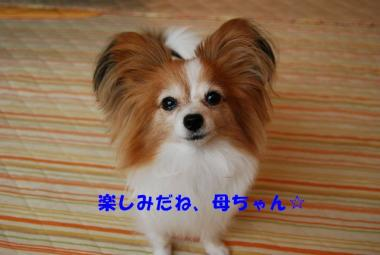 DSC_9162 ブログ