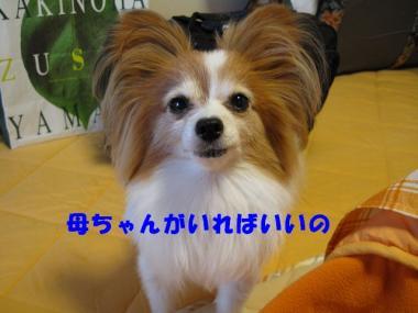 IMG_0776 ブログ