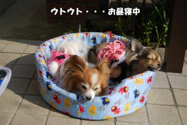 DSC_9702 ブログ
