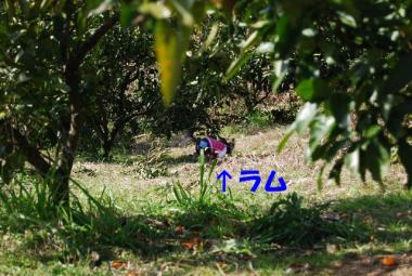 DSC_9865 ブログ